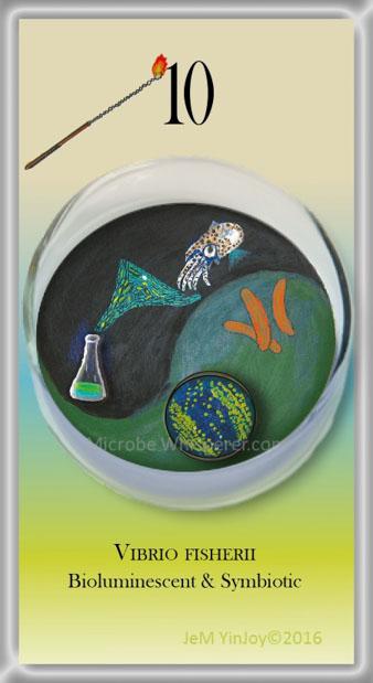 LOOPSVibrio fischeriiBioluminscent & Symbiotic