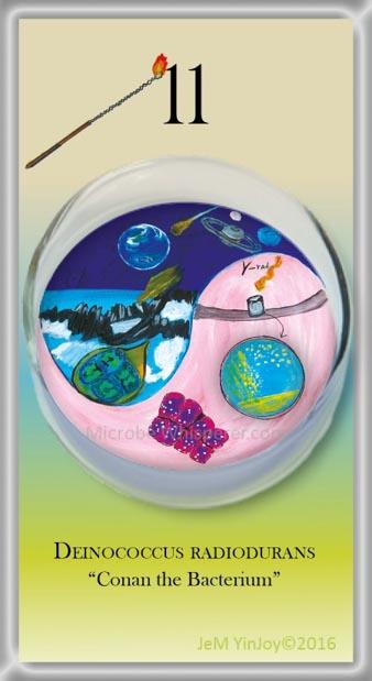 LOOPSDeinoccocusHardy Bacteria