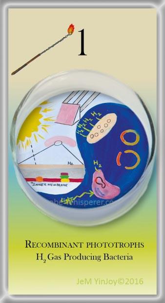 LOOPSRecombinant phototrophsH2 gas-producing bacteria
