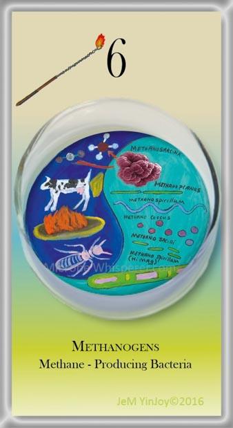 LOOPSMethanogensMethane Producing Bacteria