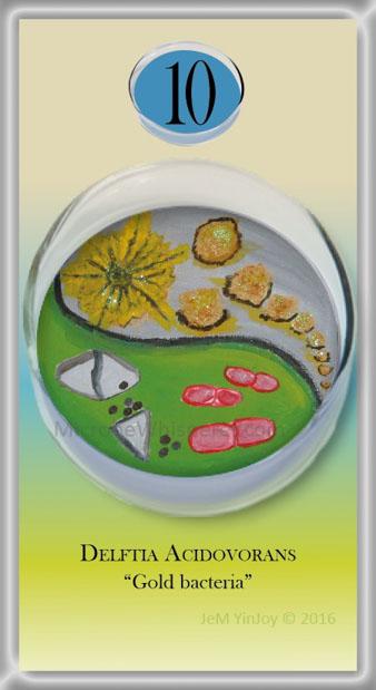 PETRIDelftia acidovoransGold bacteria