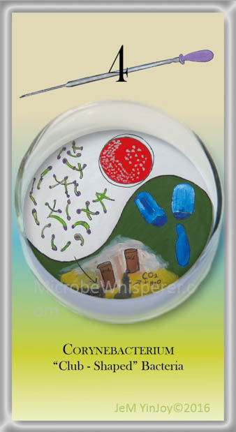 PIPETTESCorynebacteriumClub-shaped Bacteria