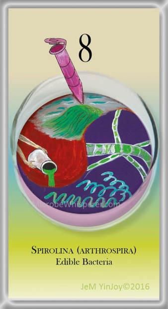TUBESSpirulinaEdible Bacteria